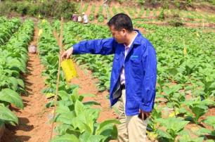 农药杀虫剂的类型主要包括哪些